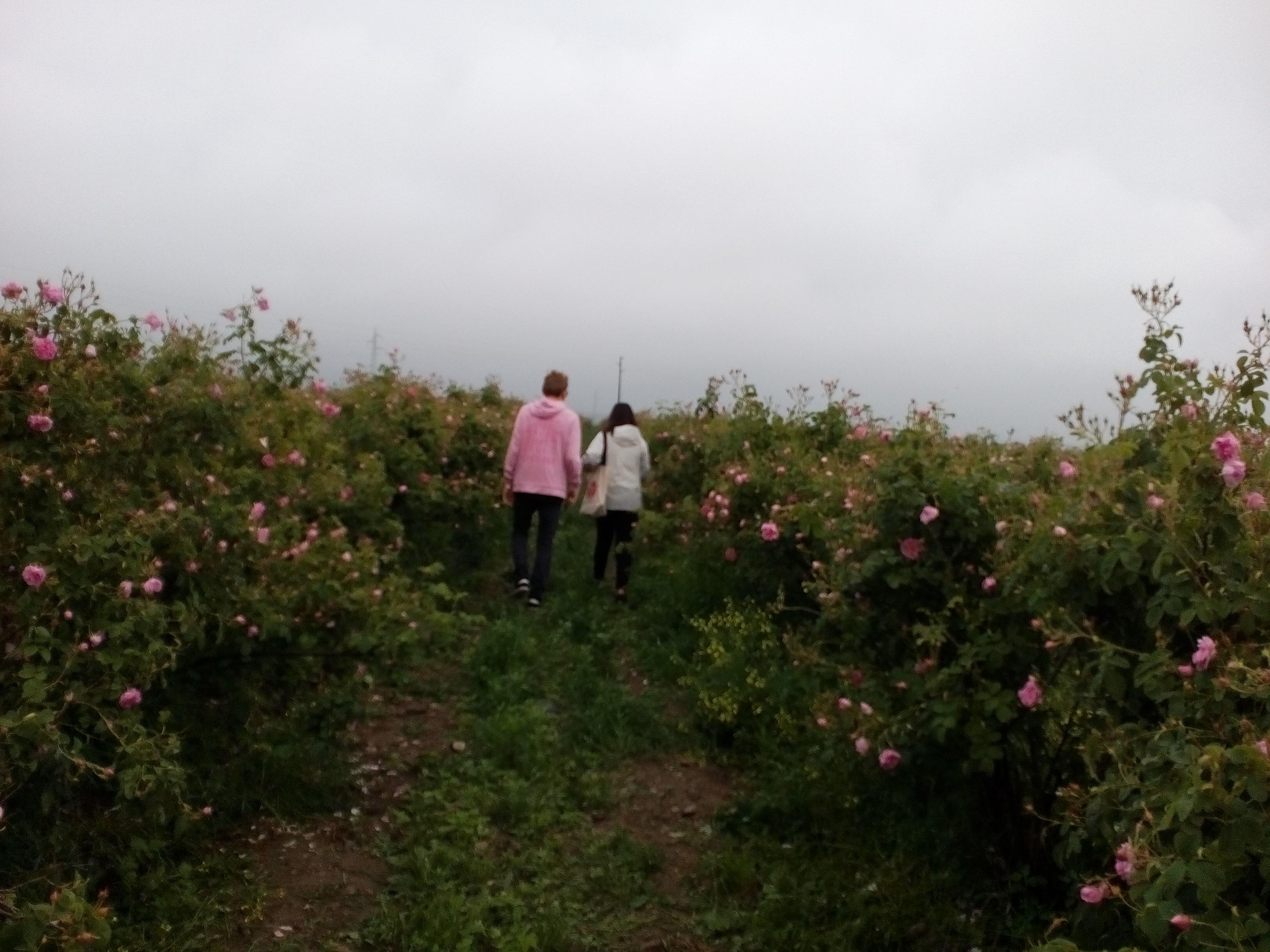 Rachel And Elijah Rose Festival