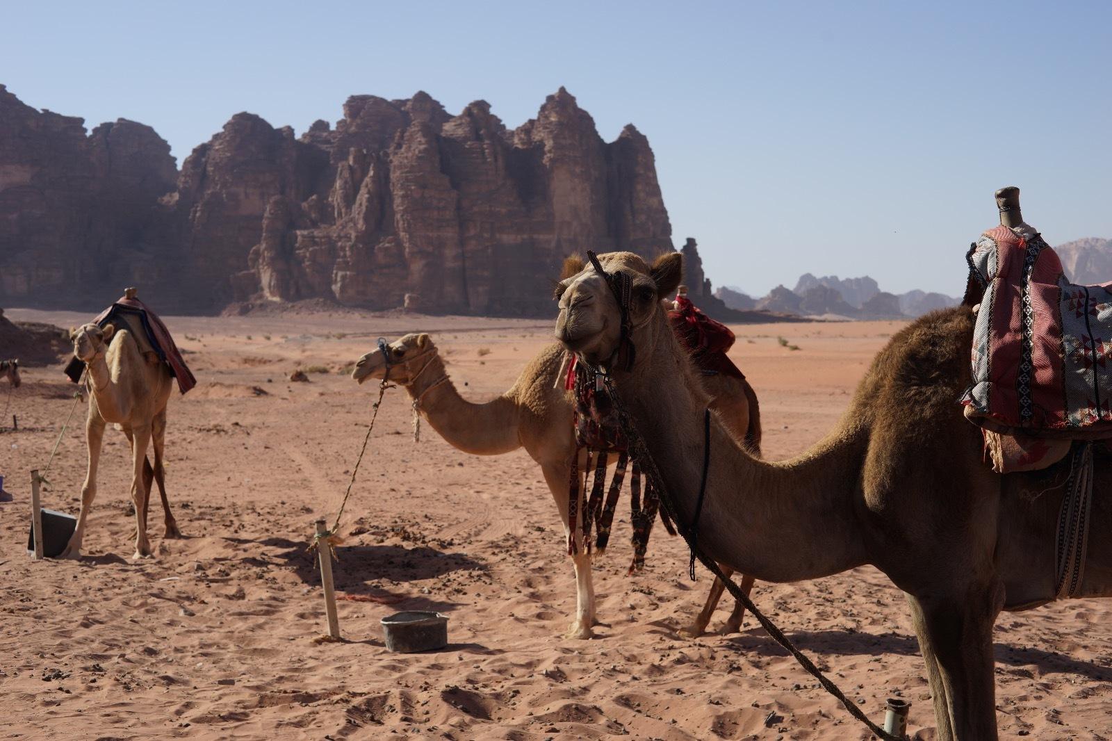 Wadi Rum Jordan 2016 17 1 1