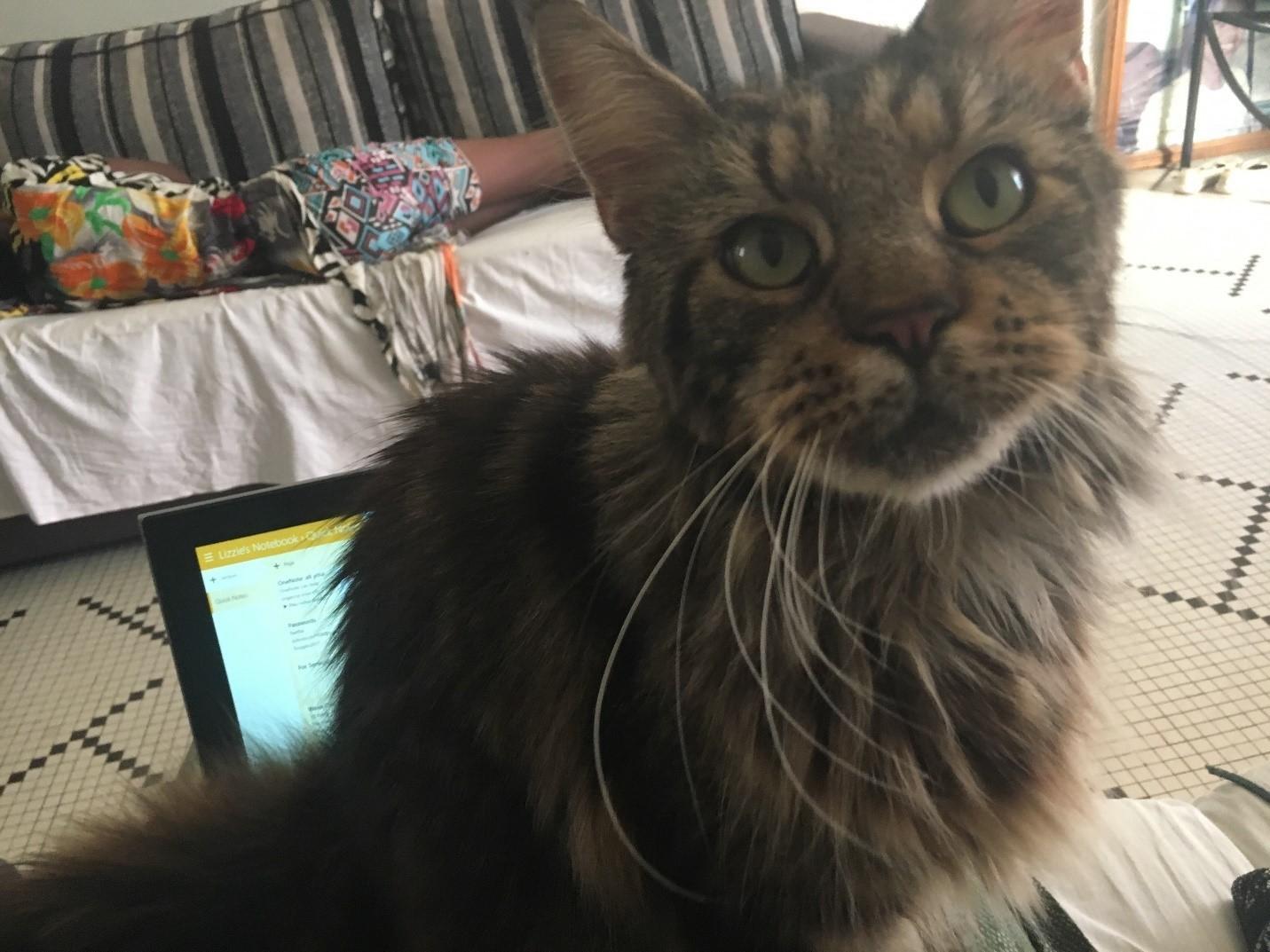 Lizzie Hs Diaries Cat