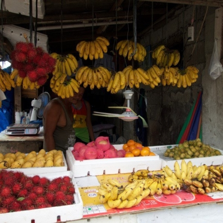 Fruit Stand Phi